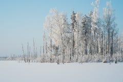 Mrozy zakrywający drzewa obraz stock