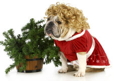 Mrs claus Royalty Free Stock Images