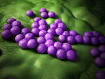 The mrsa - close up Royalty Free Stock Images