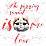 Mruczeć dźwięk jest czystym miłością, kartka z pozdrowieniami i motywacyjnym wycena dla zwierzę domowe kochanków z typograficznym Obrazy Stock