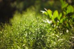 Mrugliwy żywy kolor zamazująca światła bokeh wiosna od liścia plecy Fotografia Royalty Free