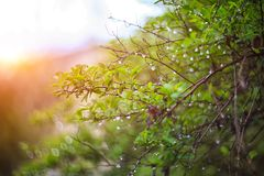 Mrugliwy żywy kolor zamazująca światła bokeh wiosna od liścia plecy Obrazy Royalty Free