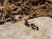 Mrówki Fotografia Royalty Free