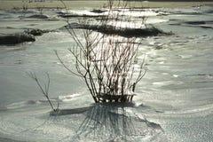 Mróz jezioro Obraz Royalty Free