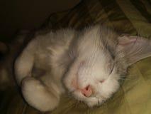Ms kitty. Sleeping Royalty Free Stock Photos