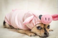 Ms Piggy Arkivfoton