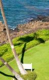 Máscara da carcaça da palmeira na grama Fotos de Stock Royalty Free