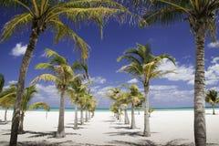 Máscara do Cararibe - fileira das palmeiras que conduzem ao mar Fotografia de Stock Royalty Free