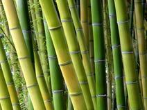 Máscaras de bambu Fotografia de Stock Royalty Free