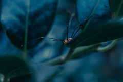 Mstr spider Royalty Free Stock Image