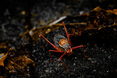 Mstr spider. A cricket on a rock surrounded by leaves stock images