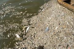 Mszalna śmierć rybi unosić się na zanieczyszczającej jezioro wodzie zdjęcia royalty free
