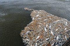 Mszalna śmierć rybi unosić się na zanieczyszczającej jezioro wodzie fotografia stock