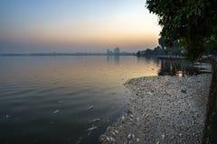 Mszalna śmierć rybi unosić się na zanieczyszczającej jezioro wodzie Fotografia brać przy wschodem słońca zdjęcia royalty free