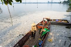 Mszalna śmierć rybi unosić się na zanieczyszczającej jezioro wodzie z łodzią atemping brać nieboszczyk ryba z wody zdjęcie stock