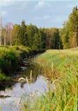 Mszarnik rzeka i las fotografia stock