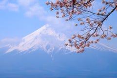 Mt富士和在日本春季日文的樱花 库存照片