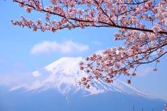 Mt富士和在日本春季(日本Cal的樱花 库存照片