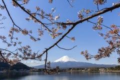 Mt富士和樱花 免版税库存图片