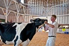 MT弗农, WA - 8月13日-在FFA嘘集市的青少年的展示母牛 免版税图库摄影