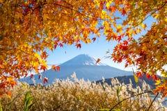 Mt的秋天季节 富士 库存图片