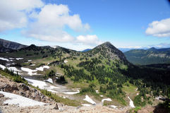 Mt Деревья и трава Стоковая Фотография RF