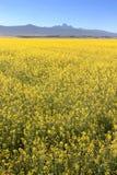 Mt Кения Стоковые Фото