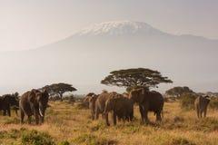 Mt Килиманджаро Стоковая Фотография