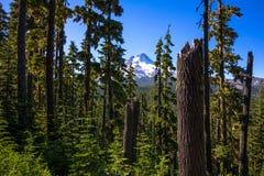 Mt Клобук через деревья Стоковая Фотография