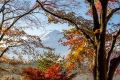 Mt Фудзи в осени с красными кленовыми листами Стоковое Изображение