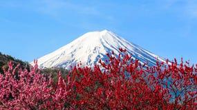 Mt Фудзи с цветением сливы Стоковая Фотография