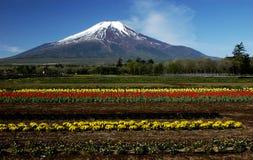 Mt Фудзи dg-22 стоковое изображение