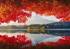 Mt Фудзи в осени на восходе солнца Стоковое Изображение RF