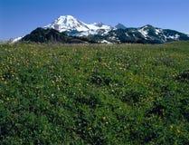 Mt Хлебопек и луг от границы горизонта отстают, северный ряд каскада, Вашингтон Стоковая Фотография