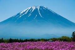 Mt 与桃红色Shibazakura领域的富士 免版税库存照片