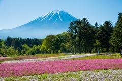 Mt 与桃红色Shibazakura领域的富士 免版税库存图片