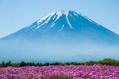 Mt 与桃红色Shibazakura领域的富士 库存照片