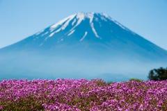 Mt 与桃红色Shibazakura领域的富士 库存图片