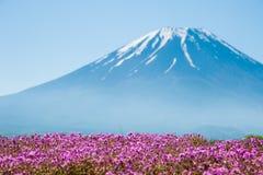 Mt 与桃红色Shibazakura领域的富士 图库摄影