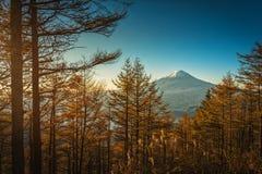 Mt 与秋天松树的富士在日出在富士河口湖町,J 免版税库存照片
