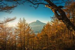 Mt 与秋天松树的富士在日出在富士河口湖町,J 免版税库存图片