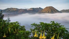 Mt 与雾的Bromo 库存照片