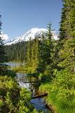 Mt 更加多雨和森林小河 库存图片