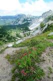 Mt 更加多雨的国家公园,华盛顿 免版税图库摄影