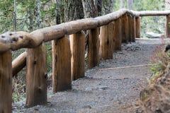 Mt更加多雨的树在冬天排行了足迹光秃雪 免版税图库摄影