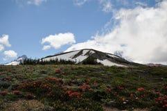 Mt 在国家公园的更加多雨的背景 免版税库存图片