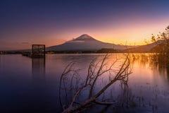 Mt 在湖Kawaguchiko的富士有在日落的死的树的在Fujik 免版税库存照片
