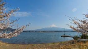 Mt 富士和川口湖有樱花树时间间隔的 股票录像