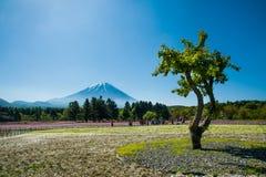 Mt 富士和树和Shibazakura 库存照片