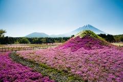 Mt 富士和Shibazakura 免版税图库摄影